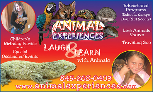 Click here to go to the animal experiences website